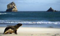 Fishing, Surfing, Hunting Beckon New Zealanders After Coronavirus Lockdown