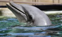 Desert Attraction Temporarily Closes After 4 Dolphin Deaths