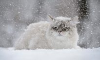 Frozen Cat 'Thawed' Back to Life by Vet Team After Being Buried in Snow