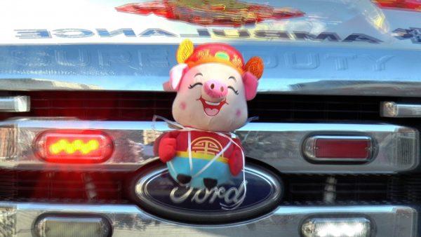 Pig-on-Bumper