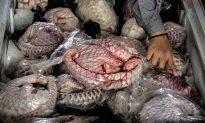6 Animals Being Eaten to Extinction in China