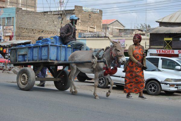 donkey is pulling cart
