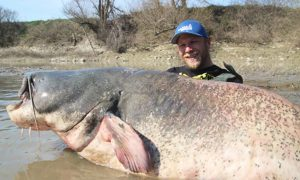Fisherman Hauls In Massive 9-ft-long Catfish, Setting New Record