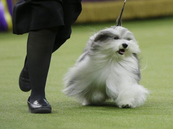 dog king 4