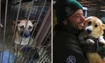 Rescuers Shut Down Puppy Farm and Free Hundreds of Dogs in S Korea in Massive Raid