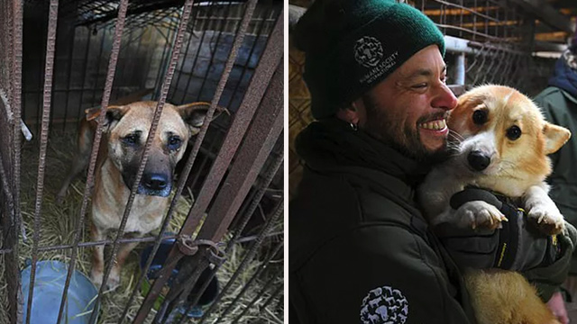 Humane Society International (HSI) rescuers raid puppy farm in Hongseong, South Korea. (Jung Yeon-je/Getty Images)