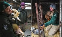 Hundreds of Dogs Bred As 'Friend and Food' Rescued From Korean Meat and Puppy Farm