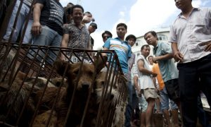 'World's Most Important Dog Show' To Be Held in China Before Annual Dog Eating Festival