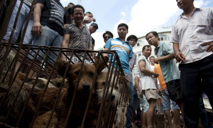 Vendors wait for customers to buy dogs in cages at a market in Yulin, in southern China's Guangxi province on June 21, 2015. (STR/AFP/Getty Images)