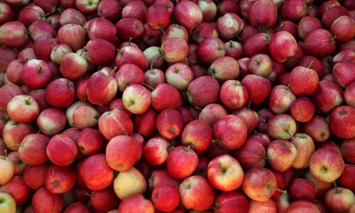 Picked apples are seen at Stocks Farm in Suckley, United Kingdom, on Oct. 10, 2016. (Eddie Keogh/File Photo/Reuters)