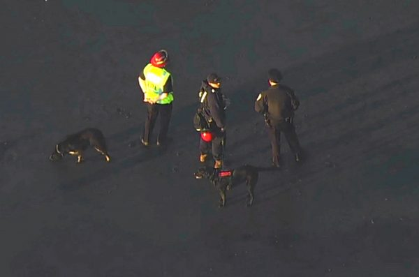 Rescuers with search dogs trying to find a person