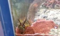 Man Discovers Massive Worm in His Fish Tank After Several Years