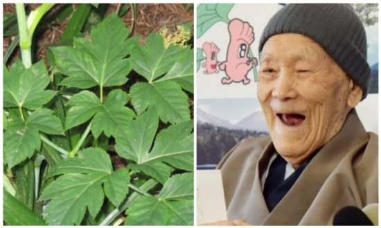 Samurai's Leaf: This Japanese Herb Might Be the Secret to Longevity, Study Says