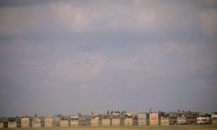 Buses that carry civilians are seen parked near Baghouz, Deir Al Zor province, Syria Feb. 11, 2019.   (REUTERS/Rodi Said/File Photo)