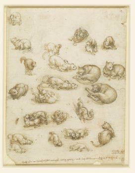 Leonardo, cats, dragon, Lion