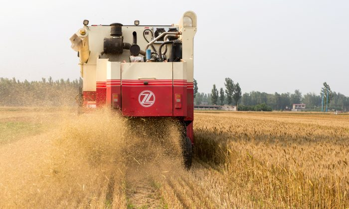 A combine harvester harvests wheat on a field in Baoding, Hebei Province, China on June 17, 2018. (Reuters)