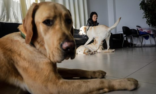 Dogs on Social Media 'Take Responsibility' With Little Bits of Help
