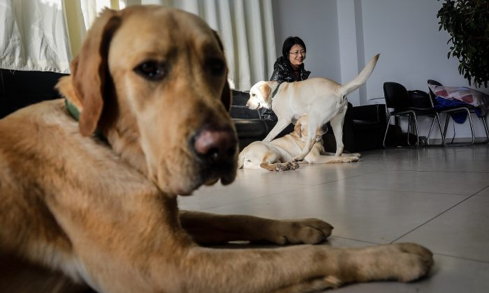 Dogs in training. (Wang He/Getty Images)