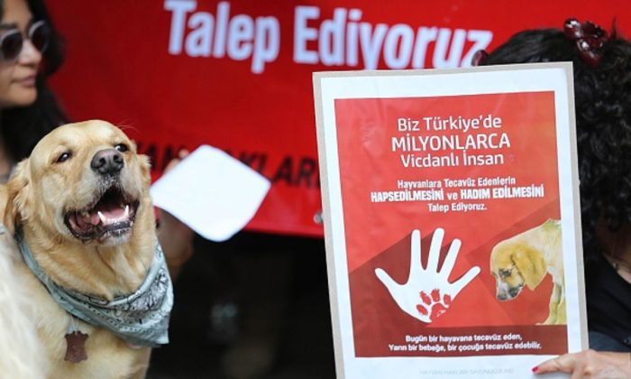 A picture shows a demonstrator holding a banner calling penalty for zoophilia, as a dog stands next to her during a demonstration in Ankara on June 10, 2018. (Adem Altan/AFP/Getty Images)