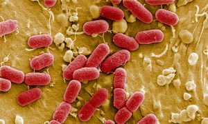 Ontario Researchers Discover How Bacteria Become Resistant to Antibiotics