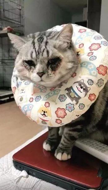 Cat eye surgery