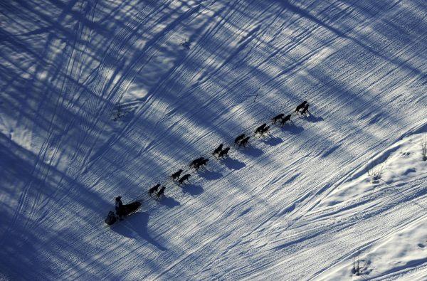 Alaska Sled Dog Race 4