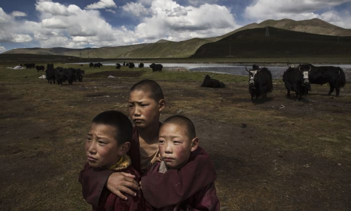 Young Tibetan Buddhist novice monks stand in the grasslands of their nomadic camp on the Tibetan Plateau in Madou County, Qinghai Province, China on July 24, 2015. (Kevin Frayer/Getty Images)