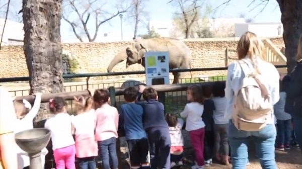 Flavia the elephant in her enclosure
