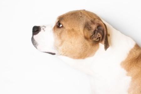 A shelter dog