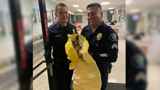 Officers pose with Max, the 10-year-old runaway Chihuahua that had been allegedly bound and beaten by a suspect now in custody in Santa Ana, Calif., on March 3, 2019. (Santa Ana Police Department)