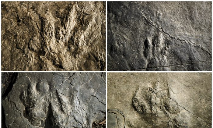 Fossilized dinosaur footprints and a non-dinosaur reptile, lower right. (Matt Rourke/AP Photo)