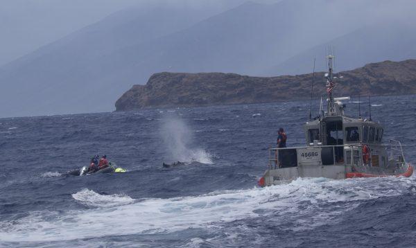 Humpback whale Hawai coast 1