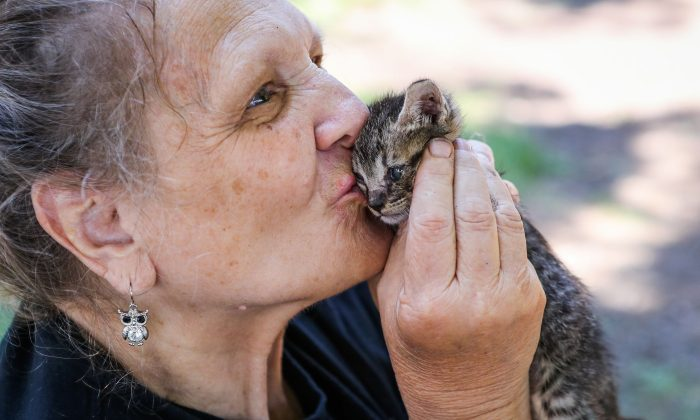 Lower Lake resident Linda Cifelli kisses a displaced kitten at Redbud Park, Calif., on Aug. 16, 2016. (Gabrielle Lurie/AFP/Getty Images)