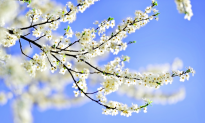 A Berkshire Journal: Shifting Into Spring