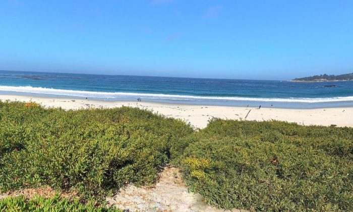 A photo shows Carmel Beach, California (Google Street View)