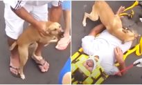 Distraught Puppy Refuses to Leave Injured Owner's Side