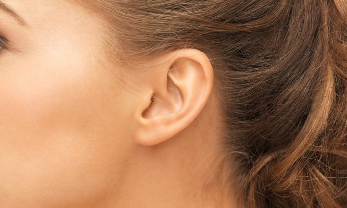 Small ear may indicate kidney problem (Syda Productions/Shutterstock)