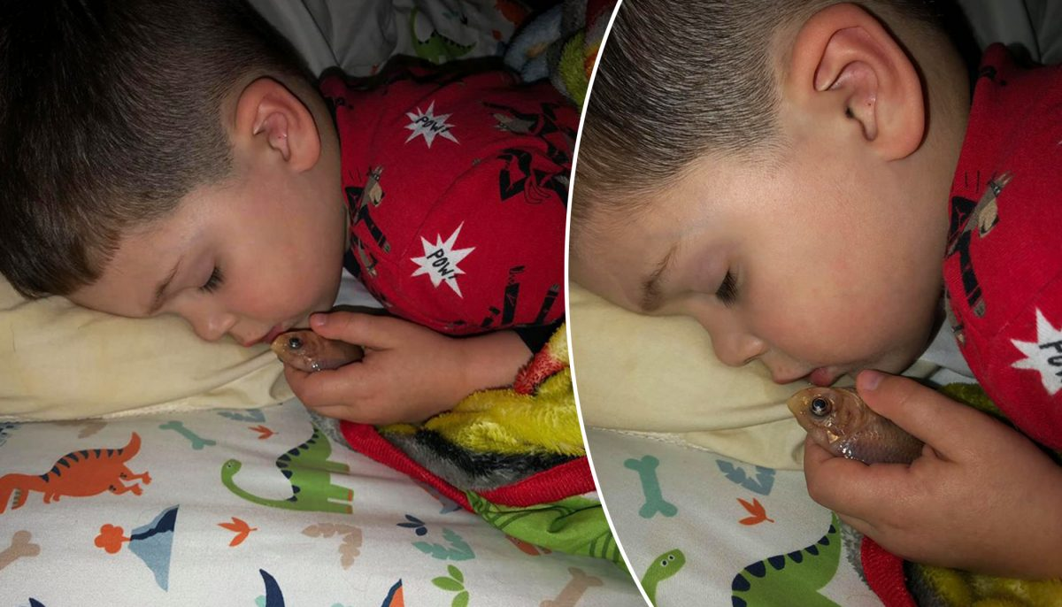 Mom finds 4-year-old fast asleep with goldfish in hand, he 'just wanted to pet it'