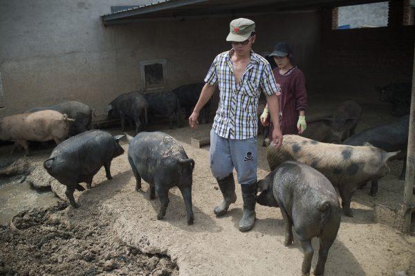 Beijing swine farm