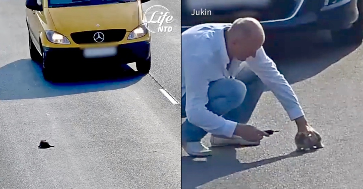 Heroic Stranger Takes a Risk After 17 Cars Pass by Stranded Kitten on Highway