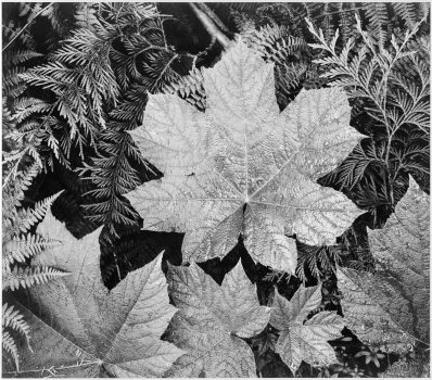 Ansel_Adams_-_National_Archives_