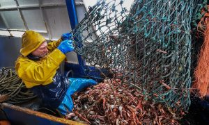 No, Climate Change Is Not Reducing Global Fish Catch