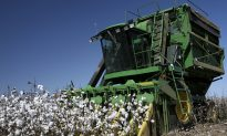 Neighbors Harvest Cancer-Stricken Farmer's 450 Acres of Crops Worth $450,000