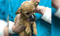 Puppy Thrown From a Bridge With Muzzle Taped Shut 'Thanks' His Rescuer for Saving Him