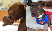 Dog Found with Swollen Muzzle Taped Shut in 2015 Is Now a Mascot for Animal Cruelty