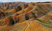 California Is Drought-Free After 376 Weeks, Rewarded with 'Super Bloom,' Butterflies