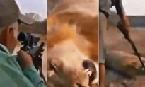 Outrage Erupts Over Footage of Trophy Hunter Shooting a Sleeping Lion