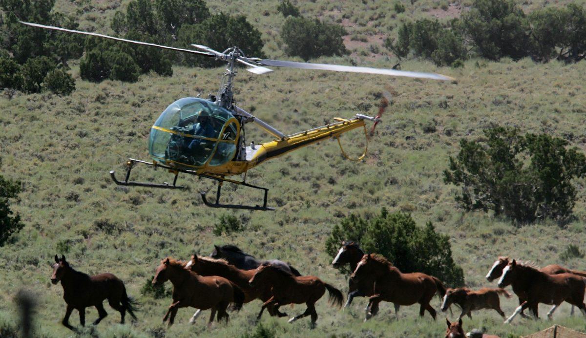 Bureau Of Land Management Rounds Up Wild Horses