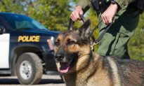 K-9 Officer Finds 90-Year-Old Dementia Sufferer Who Endured a Night Lost in the Woods