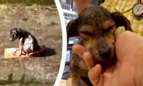 Video: puppy is thrown into a canal and left to die, but watch him miraculously recovers